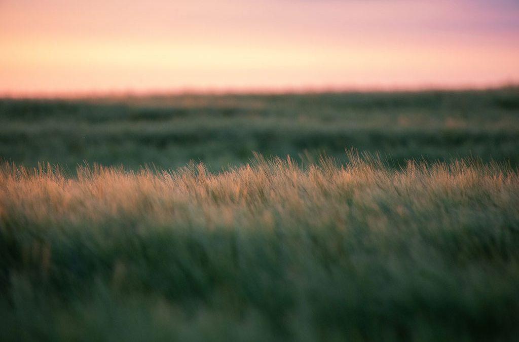 PHEASANT UPDATE — Central South Dakota